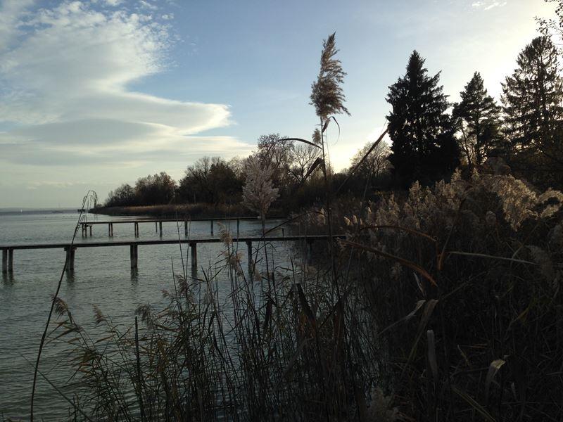 Blick auf den Schilfsaum am Ammersee im Herbst